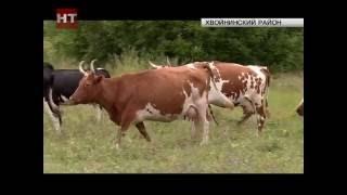 Фермеры из Хвойнинского района намерены расширять географию поставок