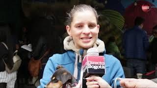 Maltrato animal: denuncias a paseadores de perros en Bogotá