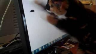 Cat vs Computer Mouse 😸