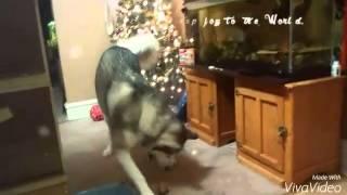 Merry Christmas from Koda's Service Dog Journey