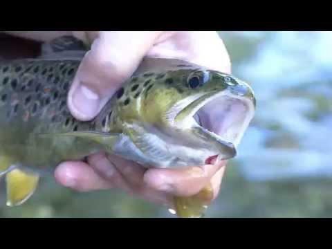Guida di pesca di trasferimento