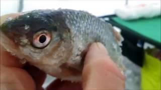 Рыбалка на яузском водохранилище аржаники