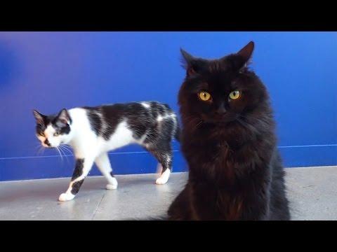 – Åtte tegn på at katten din planlegger å drepe deg