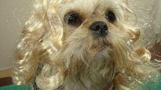 How to keep a wig on a dog
