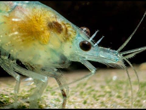 Ob man den Fisch wenn in ihr die Würmer essen kann