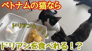 ベトナムの猫ならドリアン食べれる!? Cat Vs. Dorian