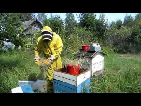 Пчеловодство.Как спасти пчёл если они не принесли мёда. Экстренная кормление пчёл  в зиму.