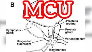 MCU Procedure   Radiographer procedure   urology