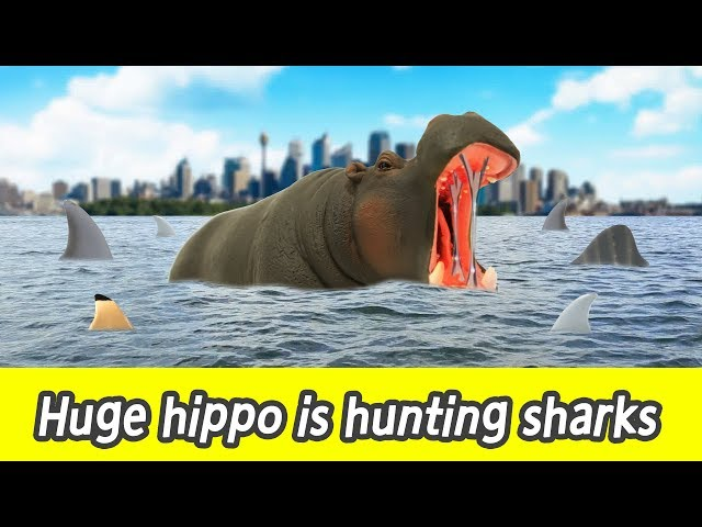 [EN] #80 Huge hippo is hunting sharks, kids education, learn sharks name, Collecta figureㅣCoCosToy