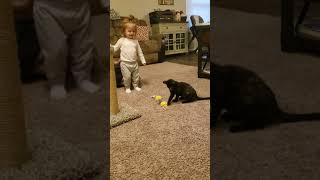 Other Cats Videos