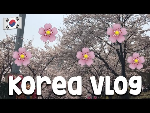 JAMSIL CHERRY BLOSSOMS | 잠실 벚꽃