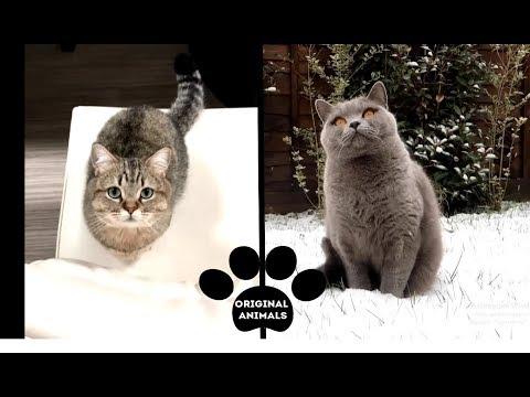 Original Animals #17. CUTE AND FUNNY ANIMALS VIDEO/ МИЛЫЕ И СМЕШНЫЕ ЖИВОТНЫЕ.