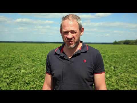 Выращивание фасоли с удобрениями BIONUTRIA. Часть 2