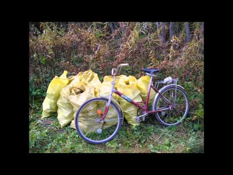 Support removal of plastic pollution and other trash in forests of Aluksne region in Latvia