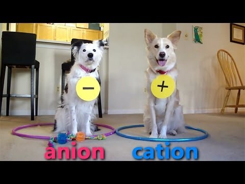 Viral of the Day: Dogs Teaching Chemistry – Video