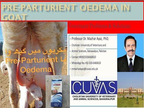 , title : 'Preparturient Oedema in Goat