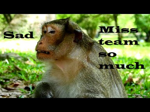 Pity on Acheb !!! He very lonely now cos jungle monkey not allow , Why Acheb leaving group?
