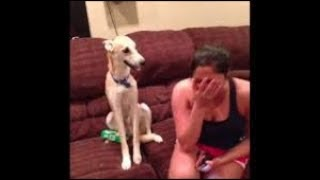 Dog and Cat Knows Exactly How To Comfort His Owners