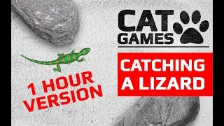 CAT GAMES - 🦎 CATCHING A LIZARD 1 HOUR VERSION (ENTERTAINMENT VIDEOS FOR CATS TO WATCH)