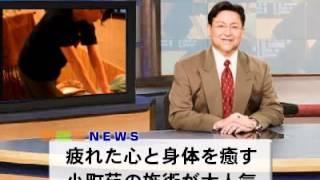 小町苑 NEWS編
