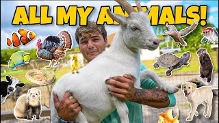 ALL My ANIMALS on My Property in ONE Video!! (update)