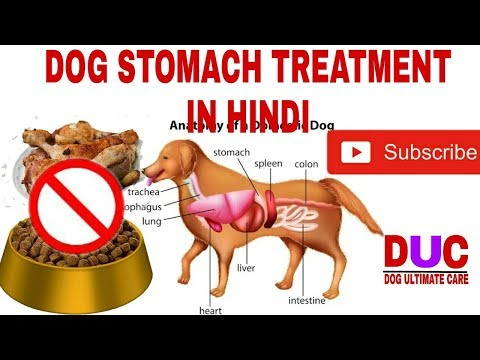 Dog Stomach Upset Cause,symptoms,treatment !! In Hindi !! Dog Ultimate Care