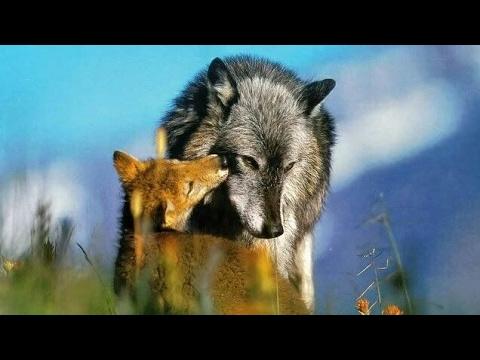 #Paws by Claws ep.4 #kristina kashytska #wolf toys