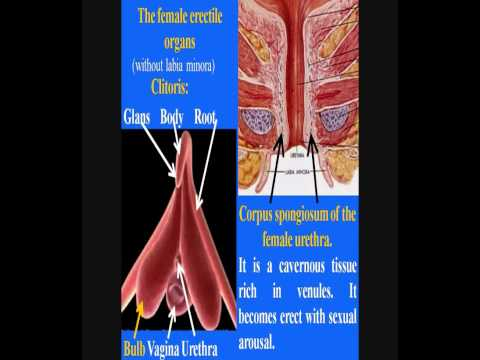 Prostata nelle donne i sintomi