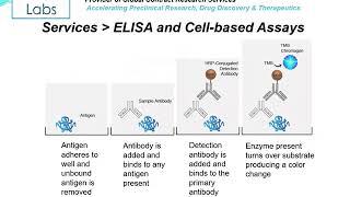 Altogen Labs ELISA and Cell-Based Assay Development