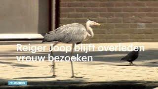 Reiger Joop blijft overleden vrouw bezoeken - RTL NIEUWS