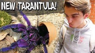 WE GOT A SUPER RARE GIANT PURPLE TARANTULA!! | BRIAN BARCZYK