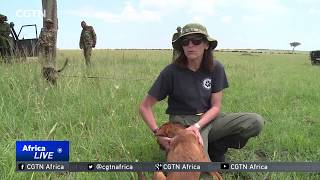 Dogs being used to fight poaching in Kenya