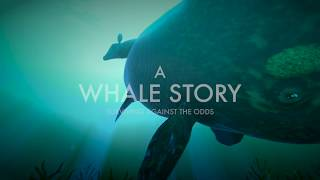 A WHALE STORY: Surviving Against the Odds -Trailer