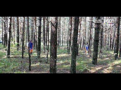 Пойти в лес и не заблудиться!