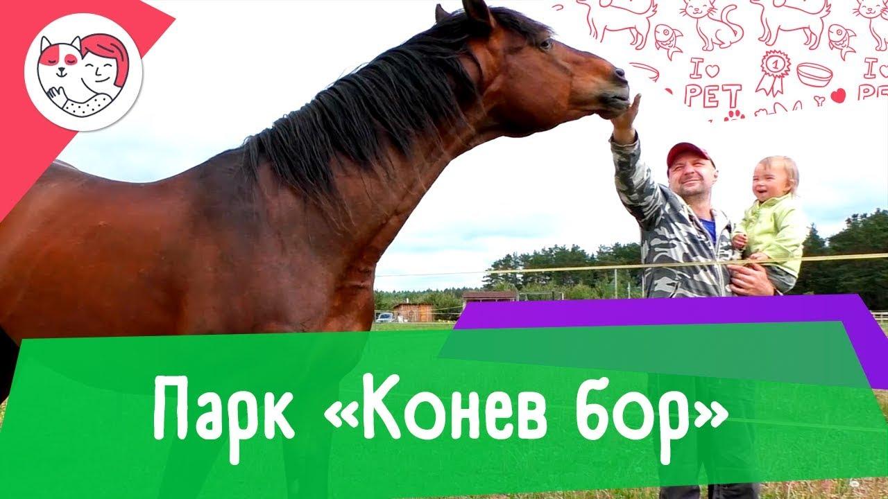 Аджилити парк «Конев бор»