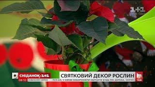 Скільки коштують горщики для кімнатних рослин і які з них вибрати для новорічного декору