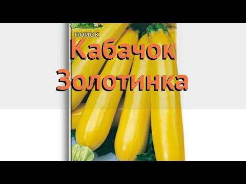 Кабачок обыкновенный Золотинка (zolotinka) 🌿 Золотинка обзор: как сажать, семена кабачка Золотинка