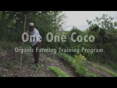 One One Coco Project- St. Thomas, Jamaica