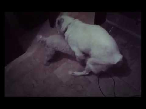 Xxx dogs