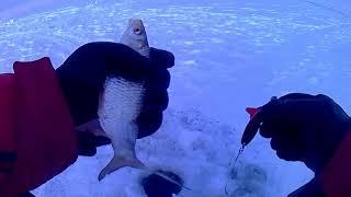 Все о рыбалка на озере зайсан