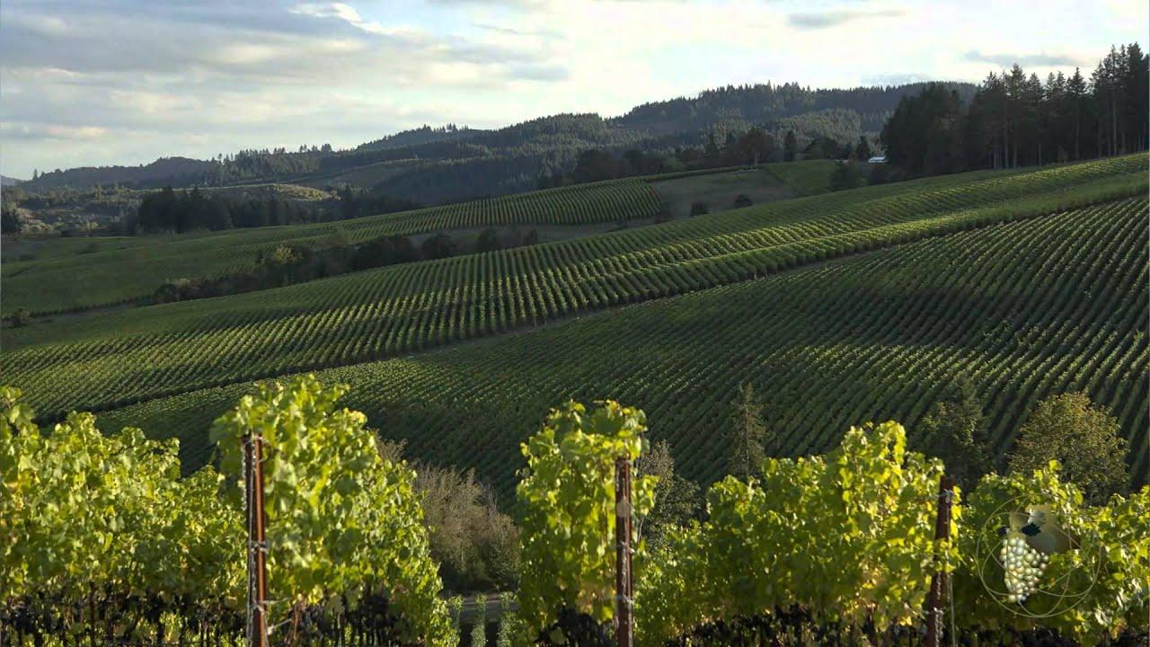 Atlas Vineyard Management Grapes Sales/Marketing