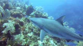 preview picture of video 'The Maze-Grand Cayman'