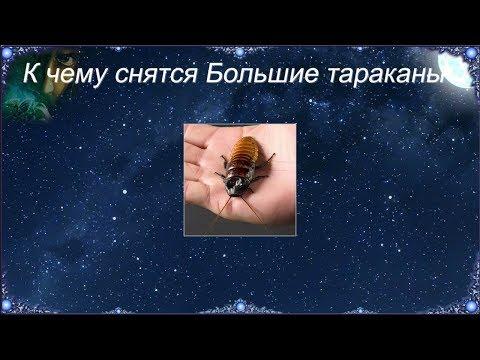 К чему снятся Большие тараканы (Сонник)