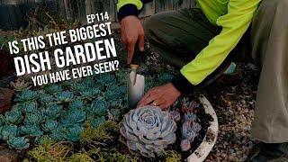 #114 Creating a MASSIVE succulent bowl arrangement - the Patreon Shrine part 4