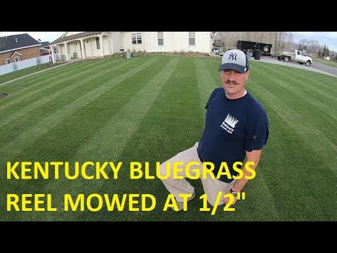 This guy with the most amazing lawn I have ever seen.