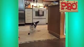 Приколы с котами – озвучка животных – Мне бы таких котов!