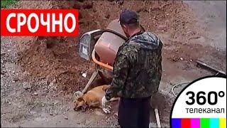 В Оренбурге разгорается скандал из-за отравления пса Рыжика