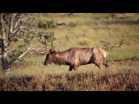 Arizona Mule Deer Hunting