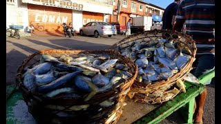 Síndrome de Haff (doença da urina preta) e queda de consumo do pescado - 29/09/2021 14:00
