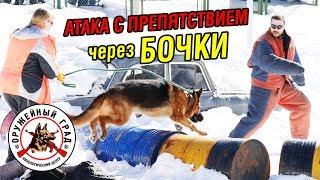 Атака фигуранта с препятствием через бочки / Тренировка собак по ЗКС